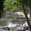 Upper suriname river