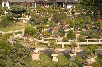 Bonsai tree garden.