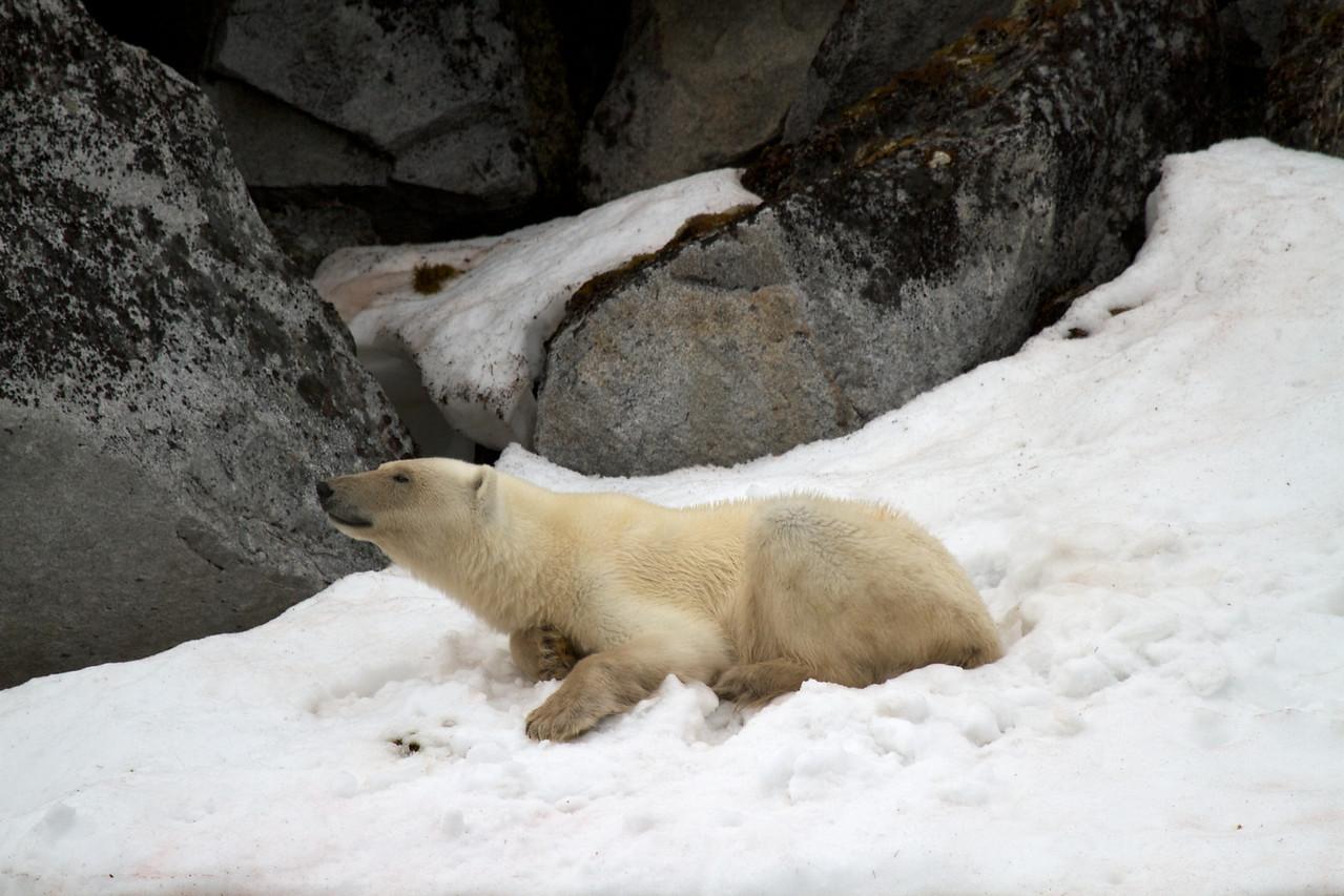 our first polar bear