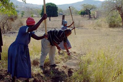 Digging Swazis*