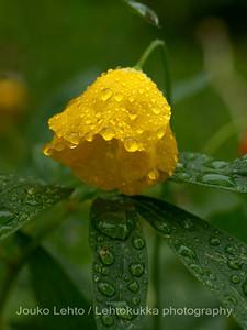 Smålands flowergarden: After the rain