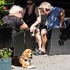 Sigtuna - beagle at outdoor cafe