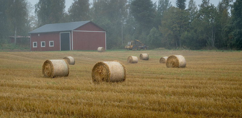 Foggy Field of Hay Rolls