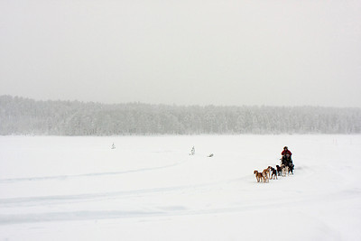 Dogsleding on Talvatis Lake Jokkmokk