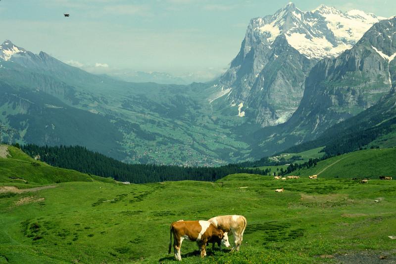 Down gaing to Kleine Scheidegg. View towards Grindelwald