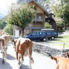 Lauterbrunnen - another view of the Cow parade.