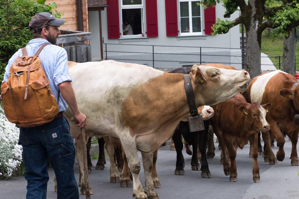 Swiss cowboys