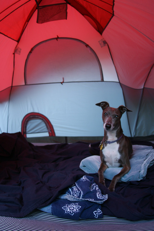 In the tent.