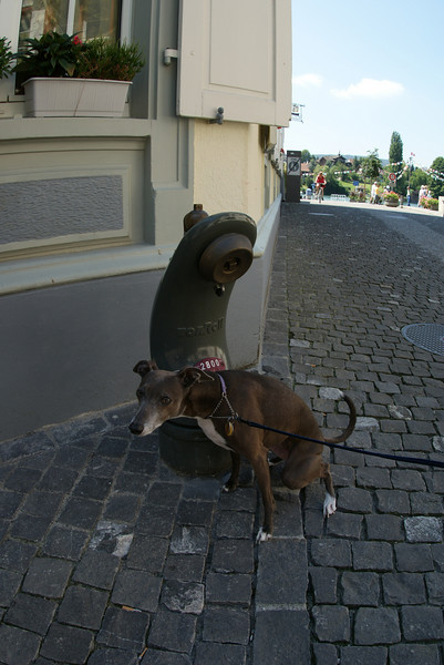 Sampling the local fire hydrants in Stein am Rhein.