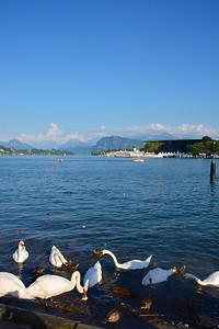 Luzern v St Johnstone Switzerland July 2014
