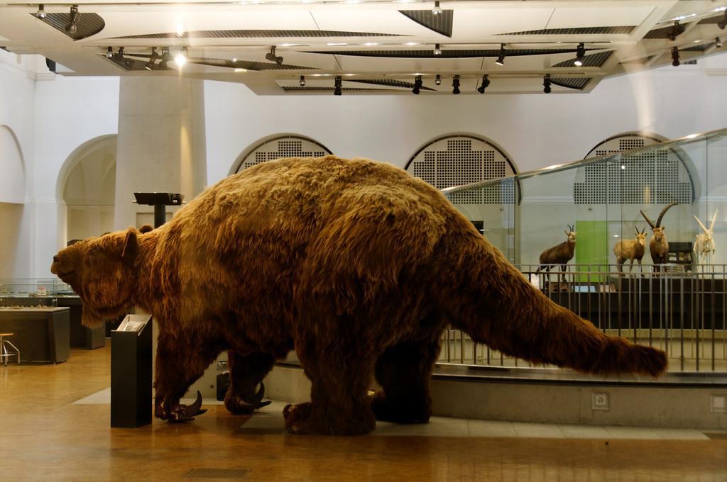 Zooligic Museum<br /> University of Zurique
