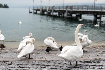 Friday in Zurich