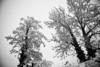 Zurich Snow