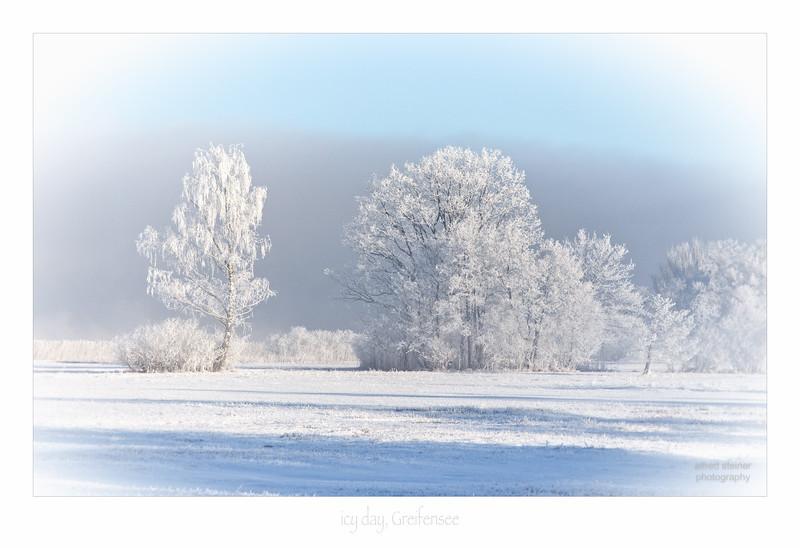 icy tree