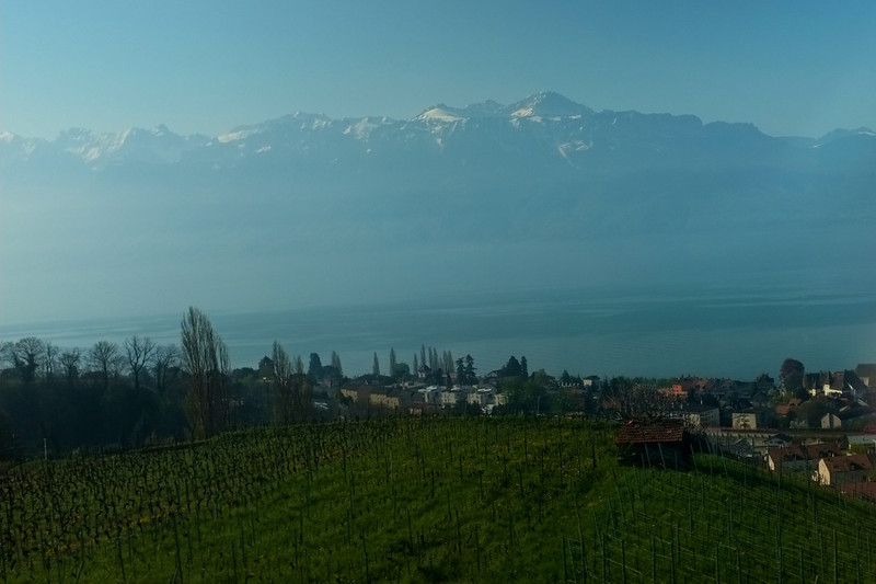 On the way back from Geneva, a view of Lake Geneva and a vineyard.