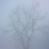 30 meters away, the trees became ghostly