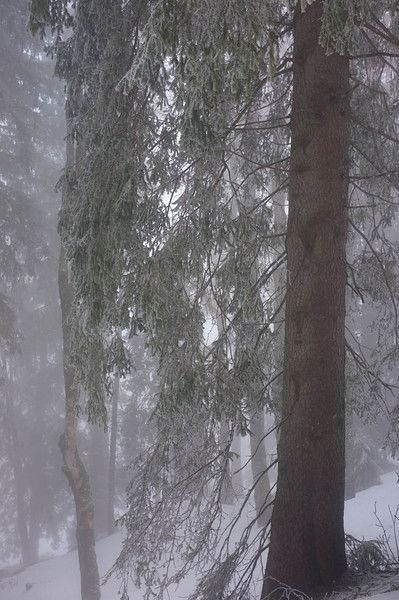 This was ice-fog, which coated all the trees