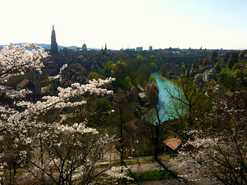 In Berne, Japanese Cherry trees were in bloom.  O-hanami on the Aare!