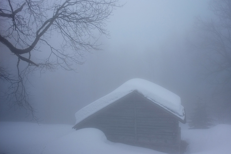 A small cow barn in the foggy snow.