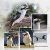 4 Tonys birds 2