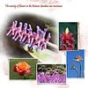 9h Botanic Gardens Flowers 1