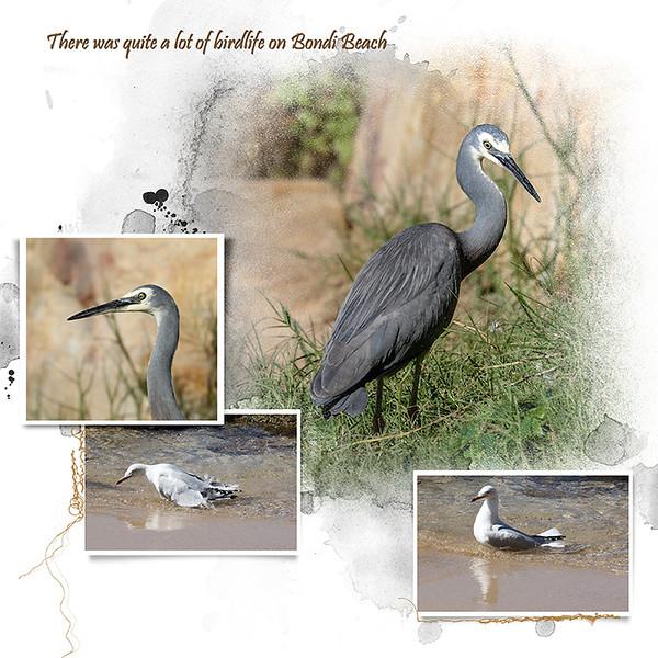 9n Bondi Birds 1