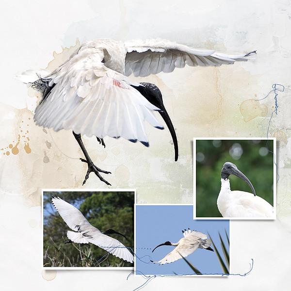 9kBotanic Gardens Birds 6