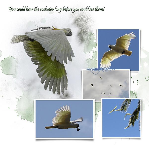 9kBotanic Gardens Birds 3