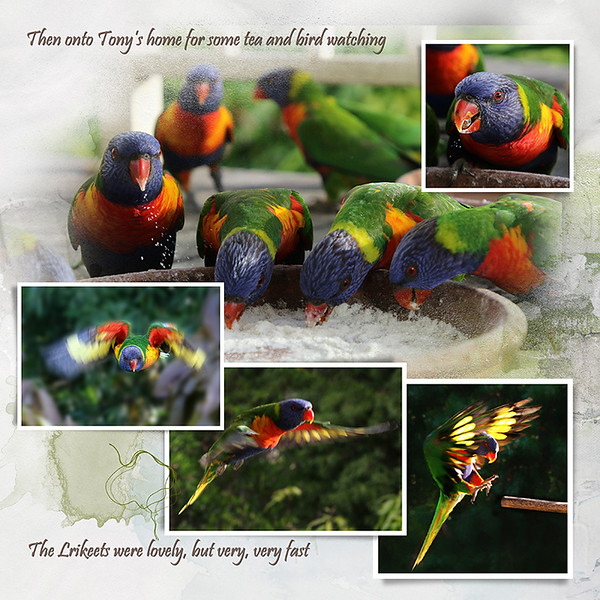 4 Tonys birds 1