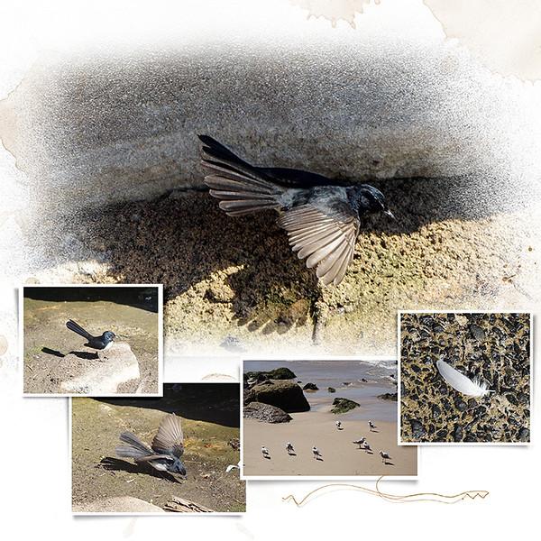 9n Bondi Birds 2