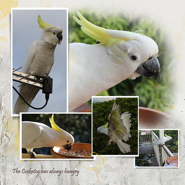 4 Tonys birds 3