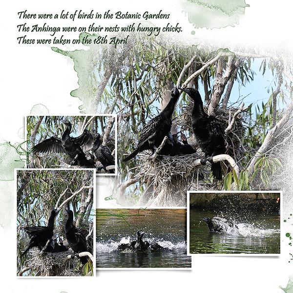 9kBotanic Gardens Birds 1