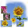9h Botanic Gardens Flowers 2