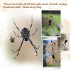 9h Botanic Gardens Spiders and bees 1