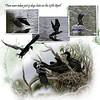 9kBotanic Gardens Birds 2