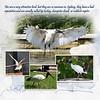 9kBotanic Gardens Birds 5