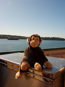 Coogee enjoying the ferry ride to Manly.