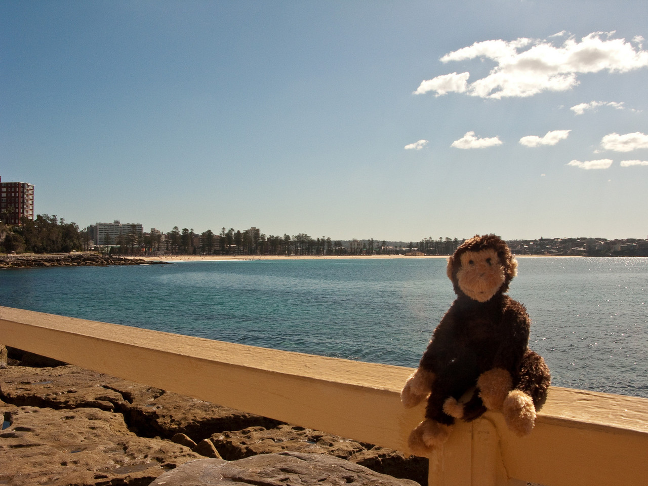 Coogee enjoying the sun with Manly Beach in the background.