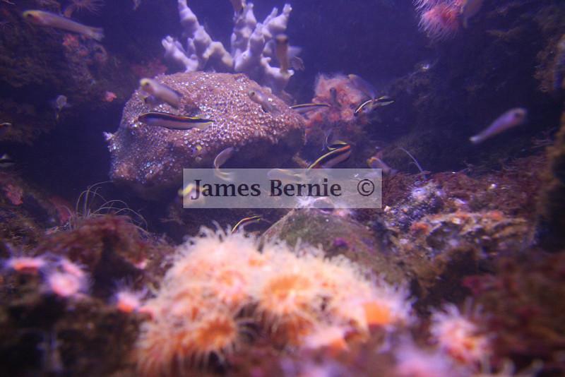 Sydney Aquarium, Sydney, NSW, September 2007, almost all photos taken through glass