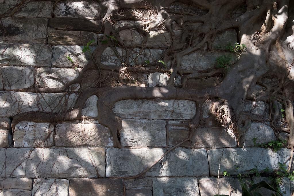 Kirribilli street restraining wall