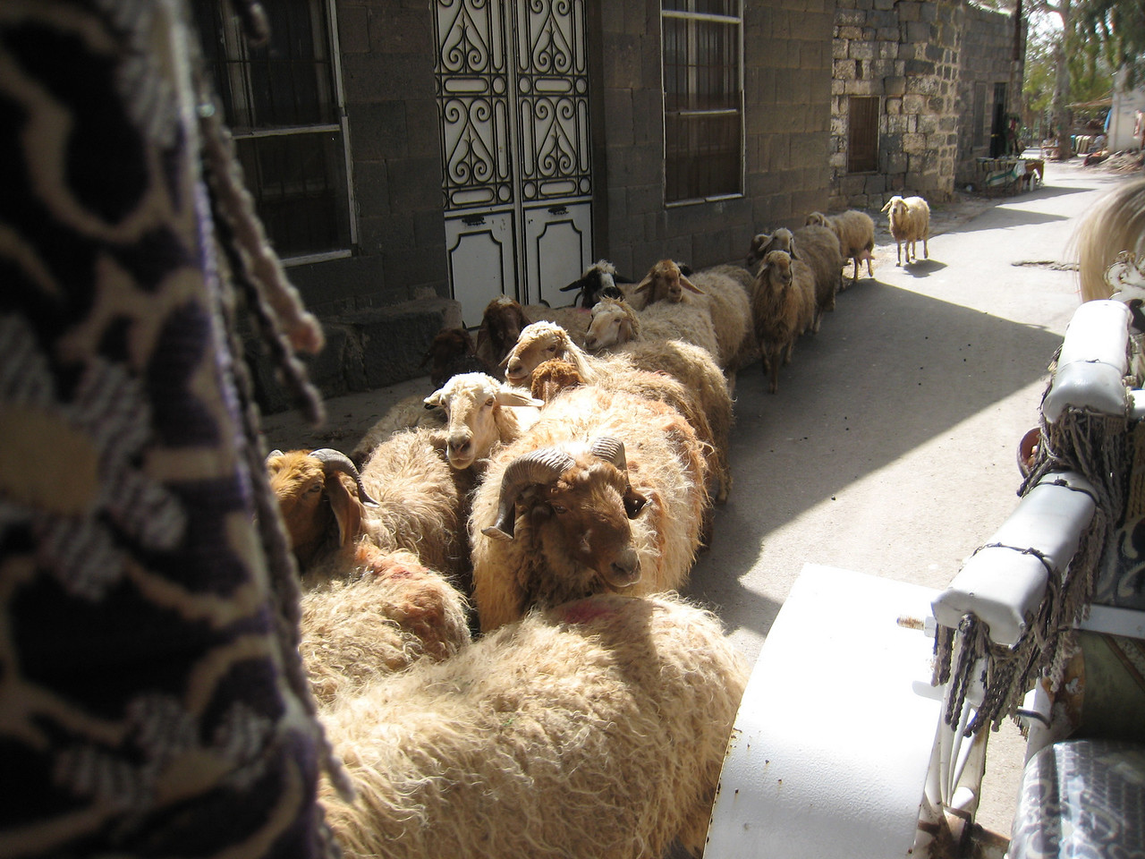 Traffic jam in Bosra.