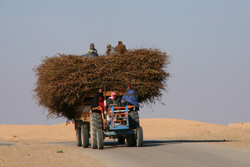 Tractor, Rasafa, Syria