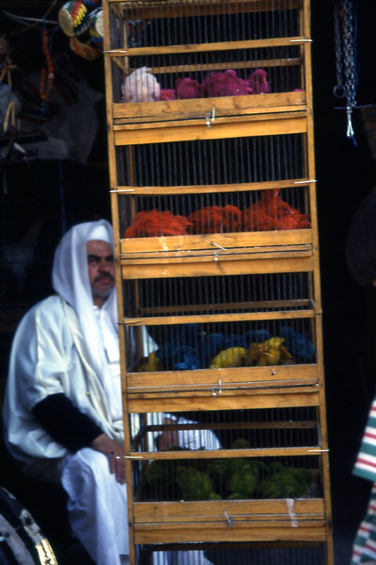 Dyed chicks in the souk in Damascus, Syria.