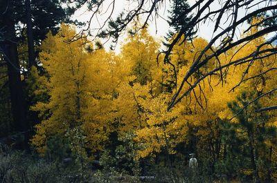 Tahoe-Taylor Vstr Ctr0009