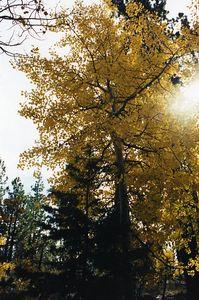 Tahoe-Taylor Vstr Ctr0004
