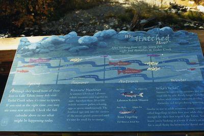 Tahoe-Taylor Vstr Ctr0007
