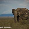 TANZANIA WEB EDITS November 2012 (456 of 732)
