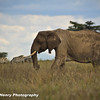 TANZANIA WEB EDITS November 2012 (454 of 732)