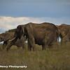 TANZANIA WEB EDITS November 2012 (453 of 732)