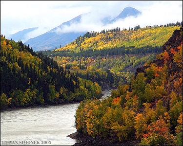 """FALL  COLORS"", Stikine river,B.C.,Canada-----""PODZIMNI BARVY"", reka Stikine,B.K.,Kanada."